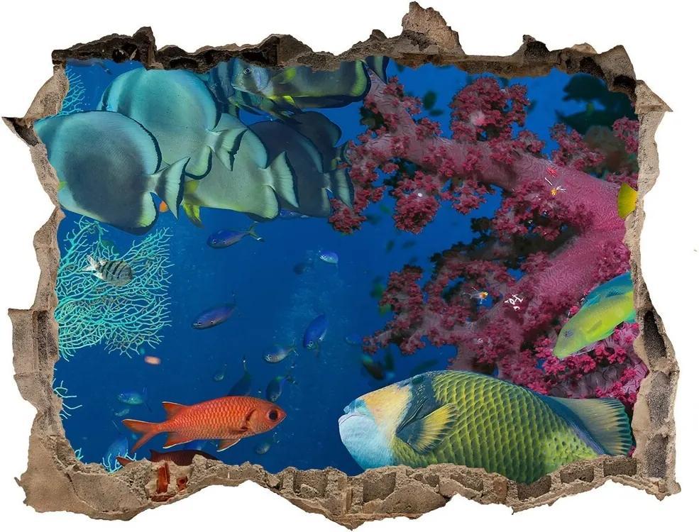 Fototapet 3D gaură în perete Recif de corali