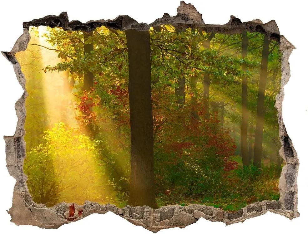 Autocolant de perete gaură 3D Pădurea în soare