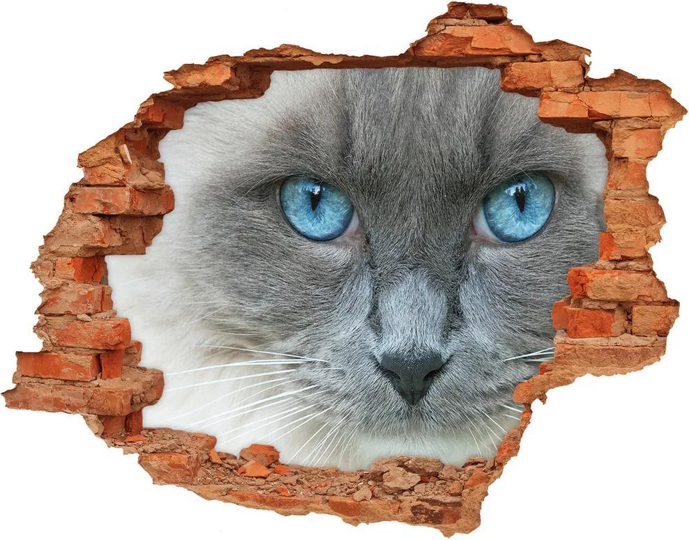 Autocolant de perete gaură 3D Cat ochi albaștri
