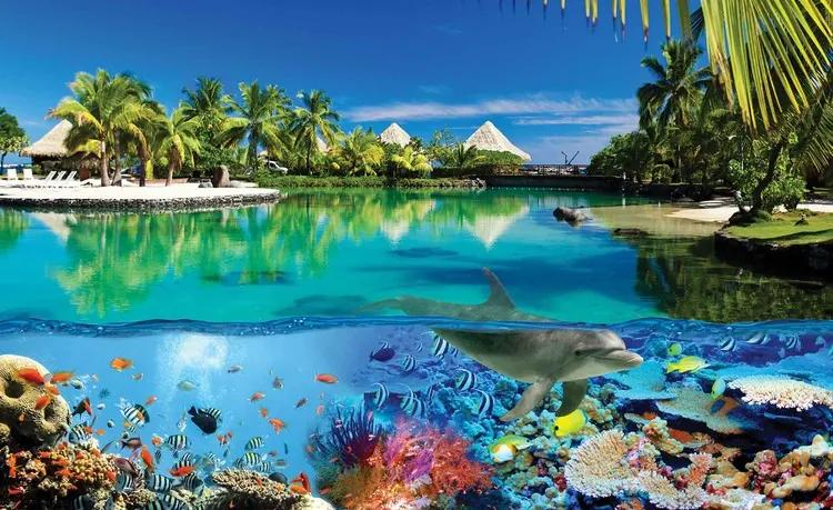 Island Paradise With Corals Dolphin Fototapet, (184 x 254 cm)
