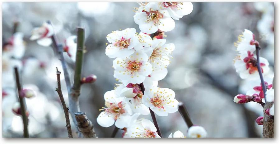 Imagine de sticlă Flori de cireș