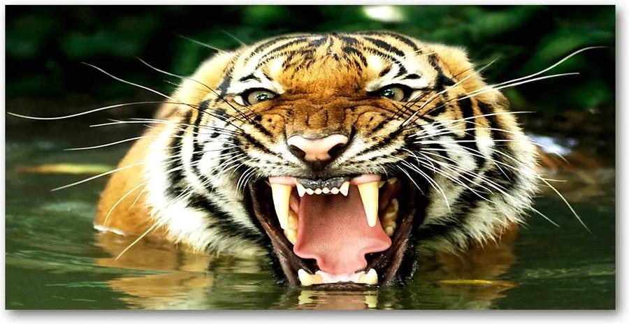 Fotografie imprimată pe sticlă Hohotitor tigru
