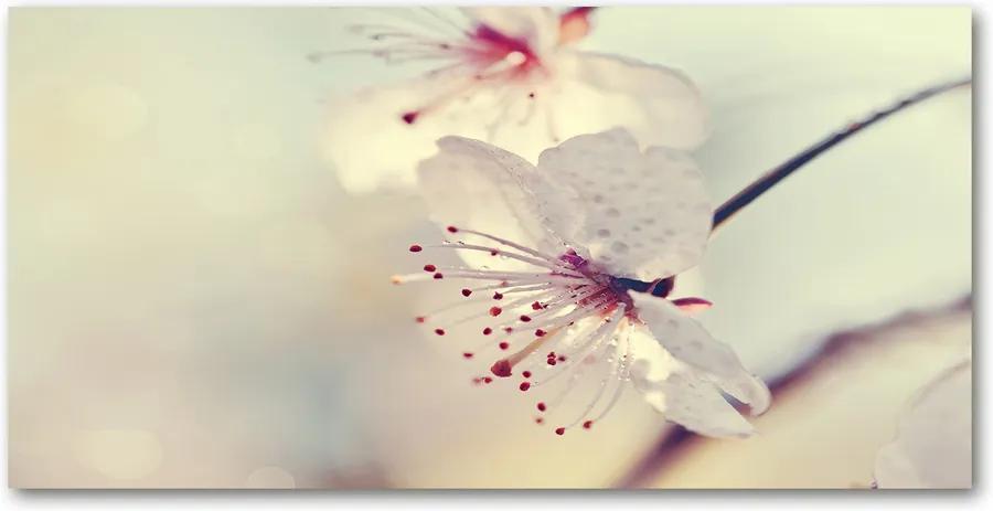 Imagine de sticlă Floare de cires