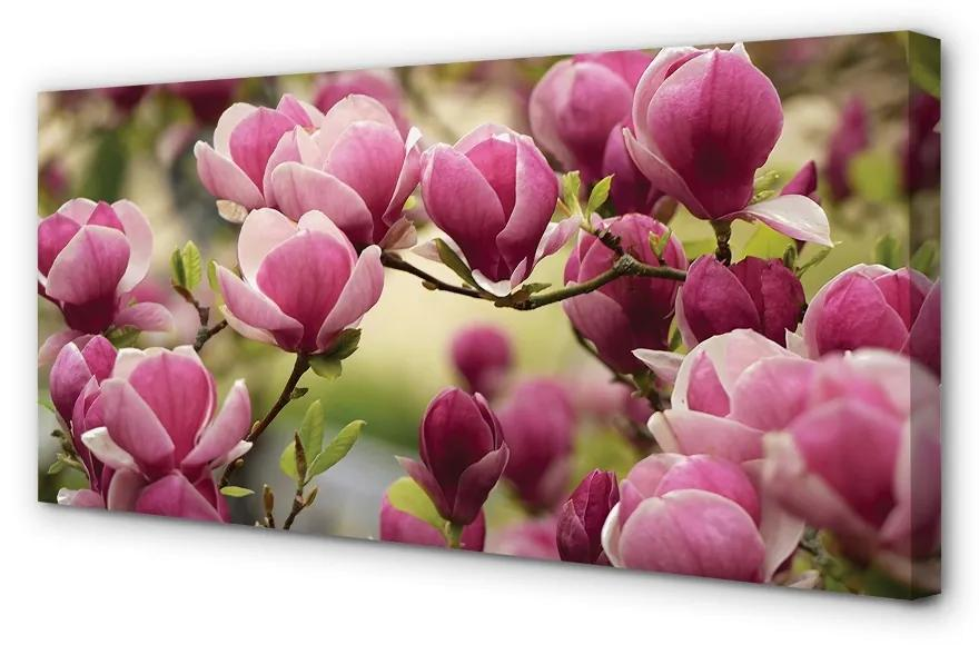 Tablouri canvas Tablouri canvas flori de copac