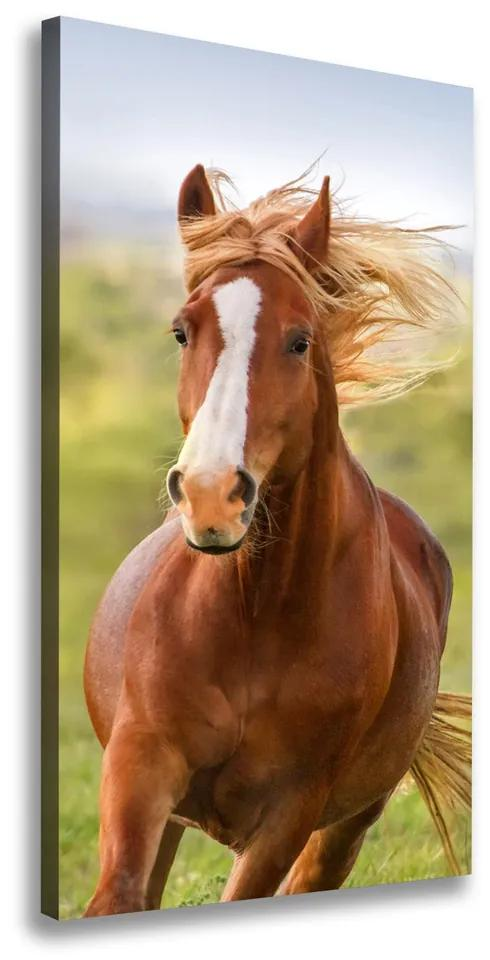 Imprimare tablou canvas Un cal în galop