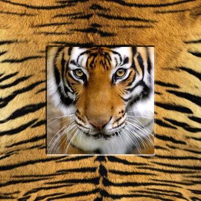 Falc Tablou pe pânză - Tiger, 30x30 cm