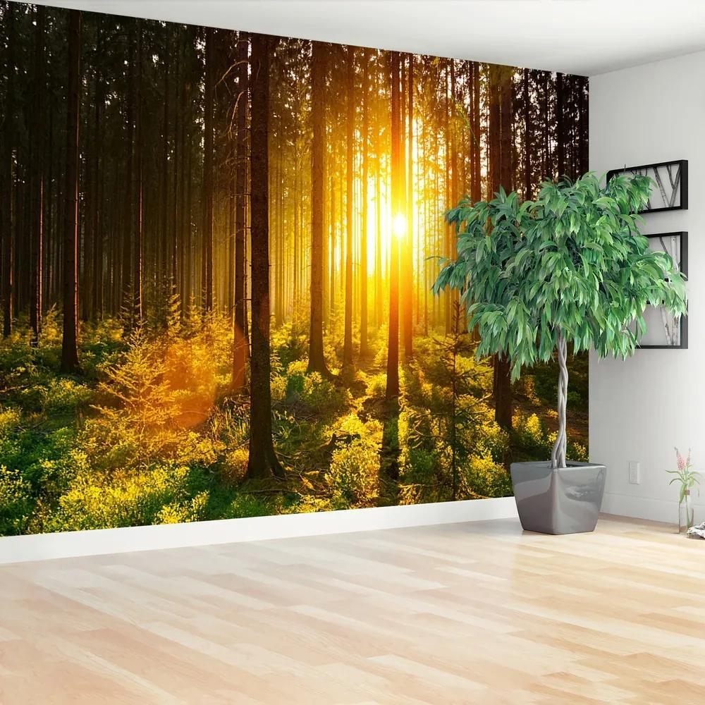 Fototapet Forest Sun