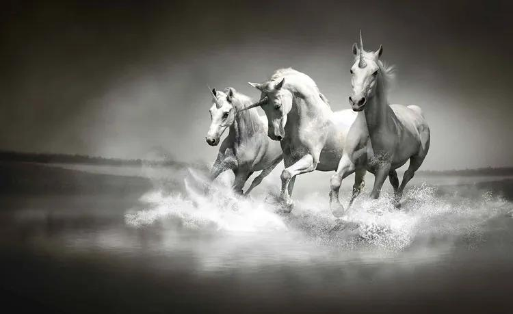Unicorns Horses Black White Fototapet, (368 x 254 cm)