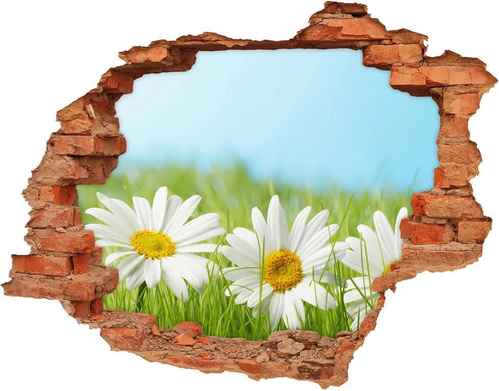 Fototapet 3D gaură în perete Margarete