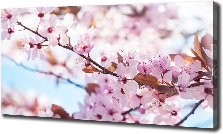 Print pe pânză Flori de cireș