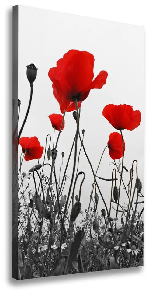 Tablou canvas Wildflowers maci