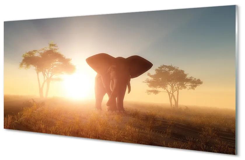 Tablouri pe sticlă Elephant copac est