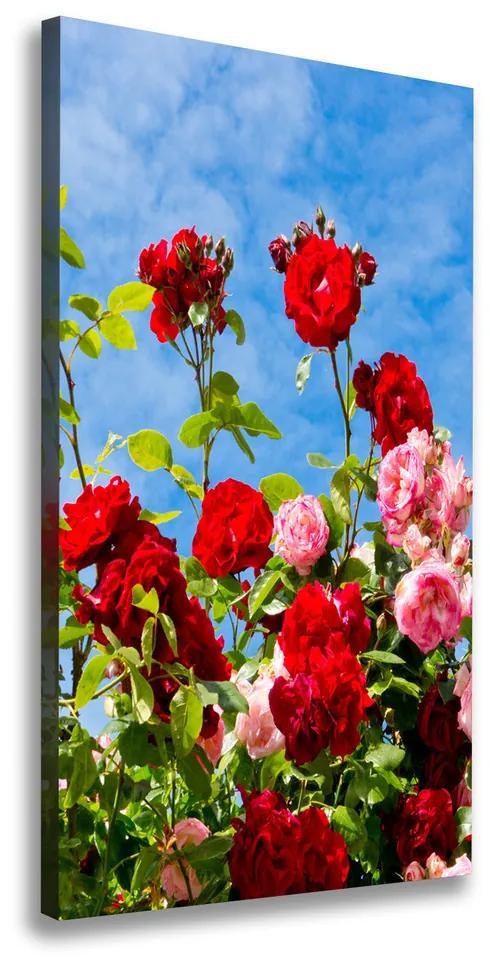 Print pe pânză Trandafir salbatic