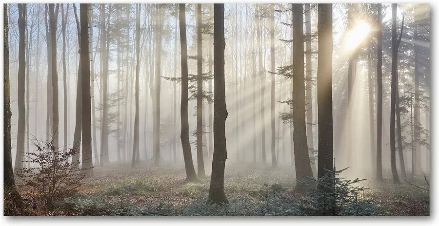 Tablou pe acril Ceață în pădure