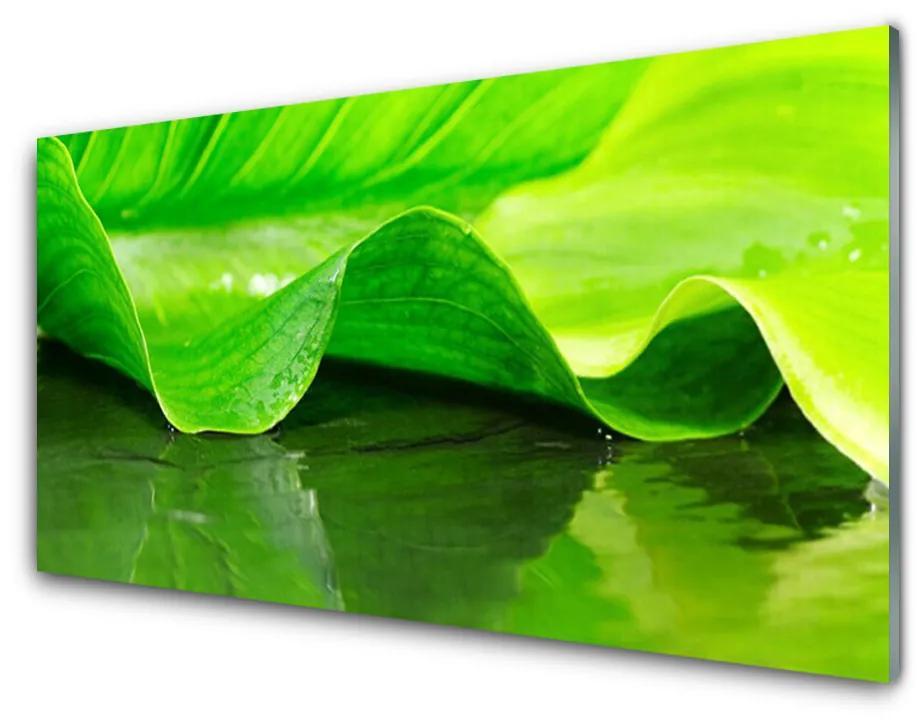 Tablou pe sticla acrilica Frunza verde florale