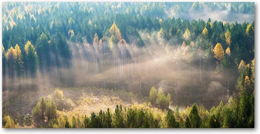 Tablou pe pe sticlă Ceață în pădure