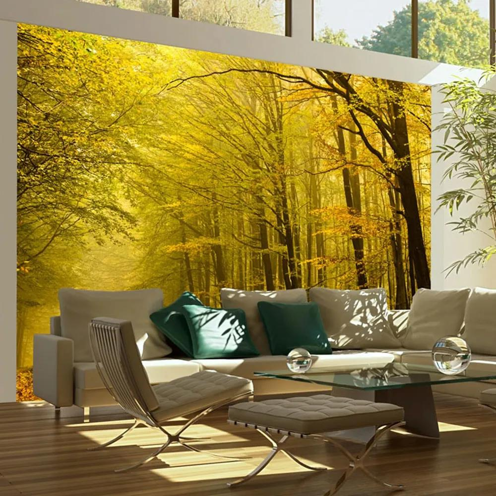 Fototapet - Road in autumn forest
