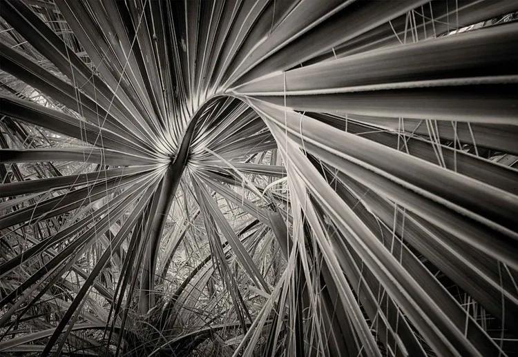 Palm Tree Leave Fototapet, (368 x 254 cm)
