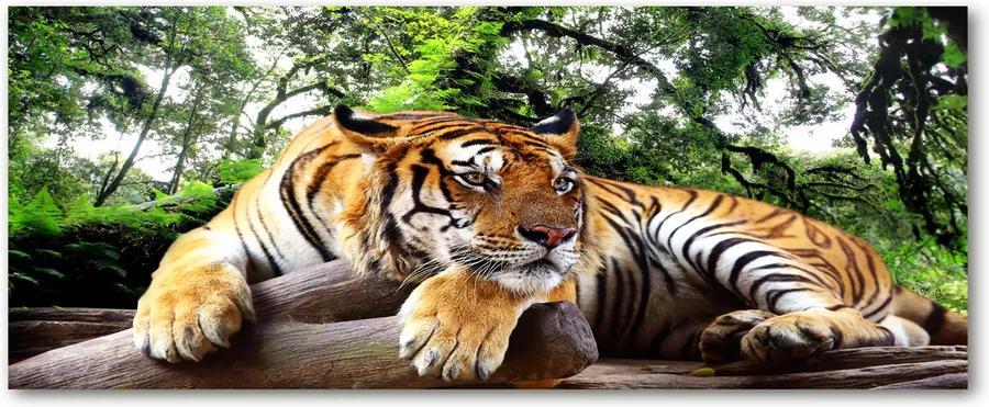 Tablou pe sticlă acrilică Tiger pe stâncă