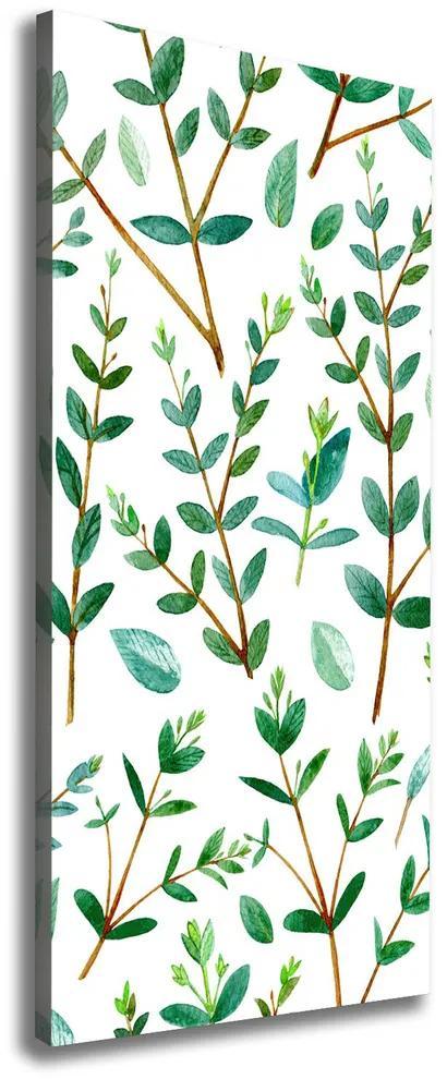 Pictură pe pânză Crengi de eucalipt