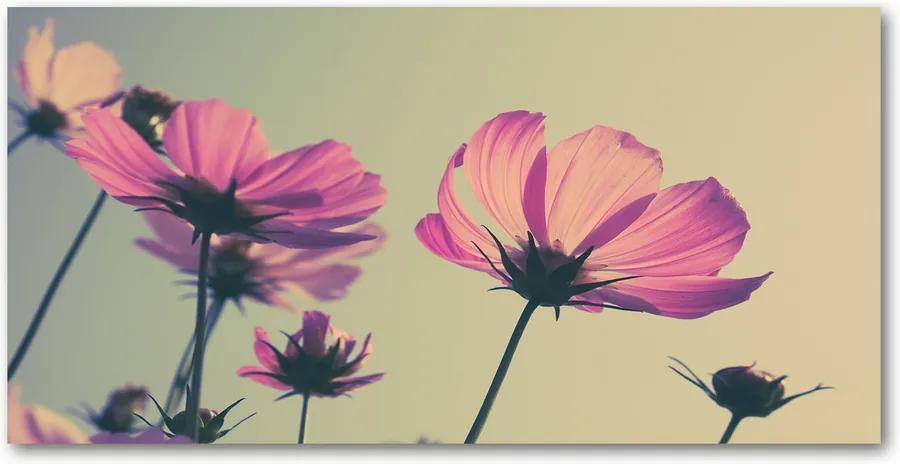 Fotografie imprimată pe sticlă Flori roz