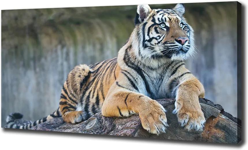 Pictură pe pânză Tigru