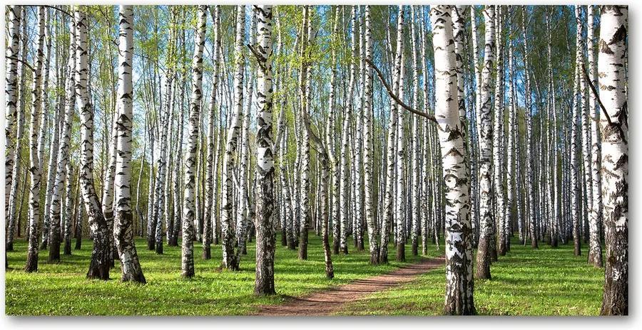 Imagine de sticlă Pădurea de mesteacăn