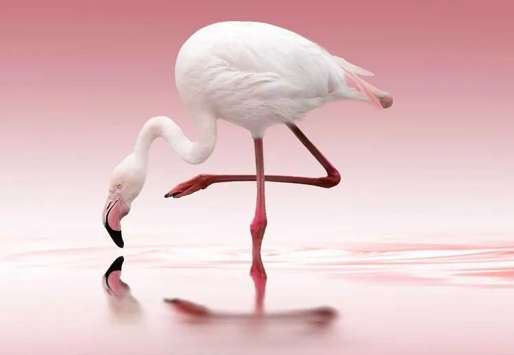 Flamingo Fototapet, (254 x 184 cm)