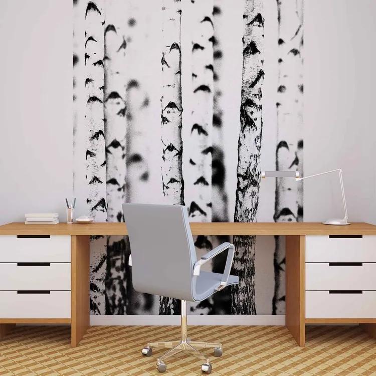 Birch Trees Fototapet, (206 x 275 cm)