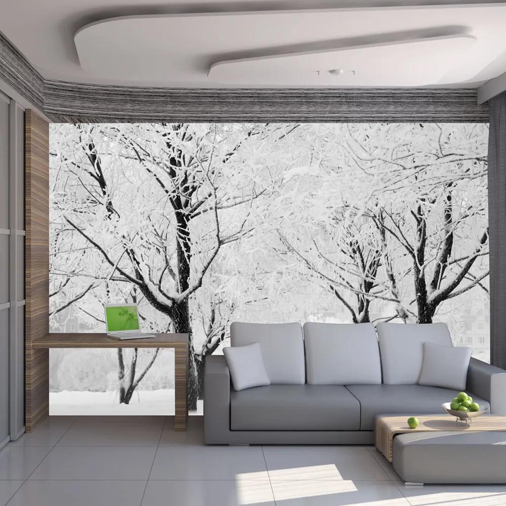 Bimago Fototapet - Trees - winter landscape 200x154 cm