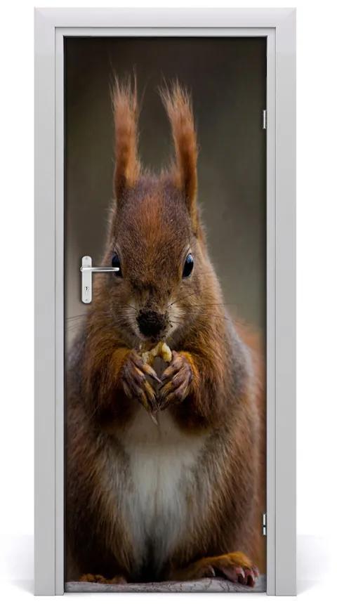 Autocolante pentru usi perete Squirrel