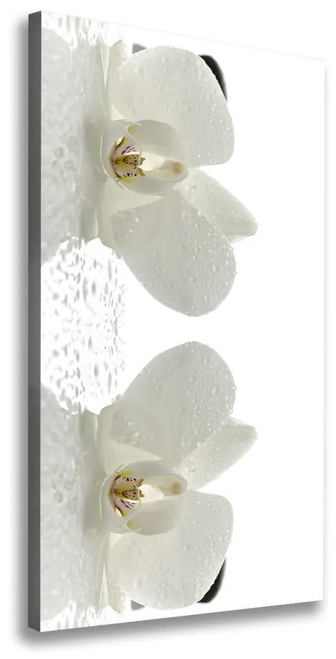Print pe canvas Orhideea și pietre
