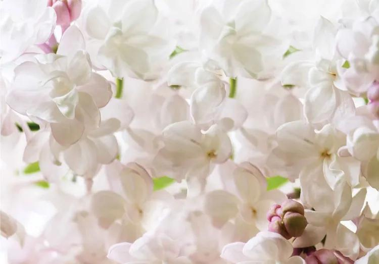 Flowers Spring Blossom Fototapet, (254 x 184 cm)