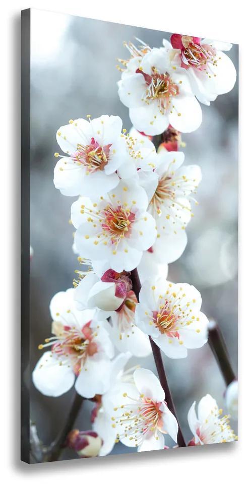 Imprimare tablou canvas Flori de cireș