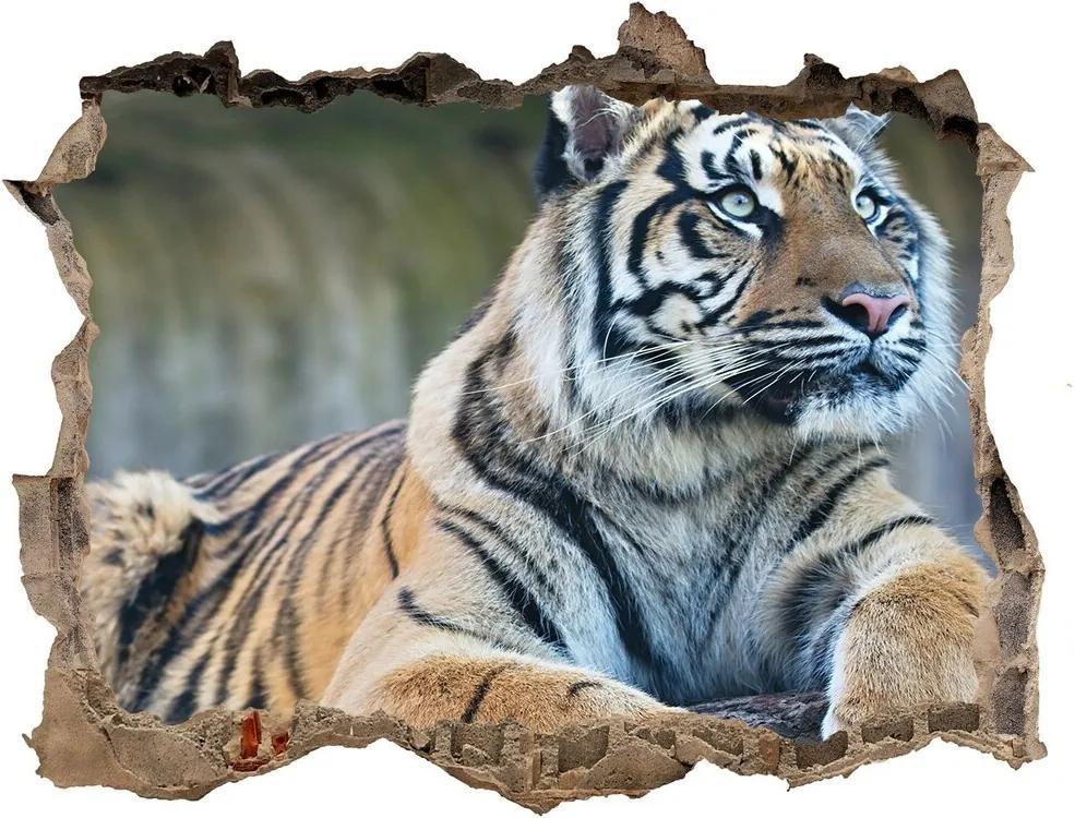 Autocolant 3D gaura cu priveliște Tigru