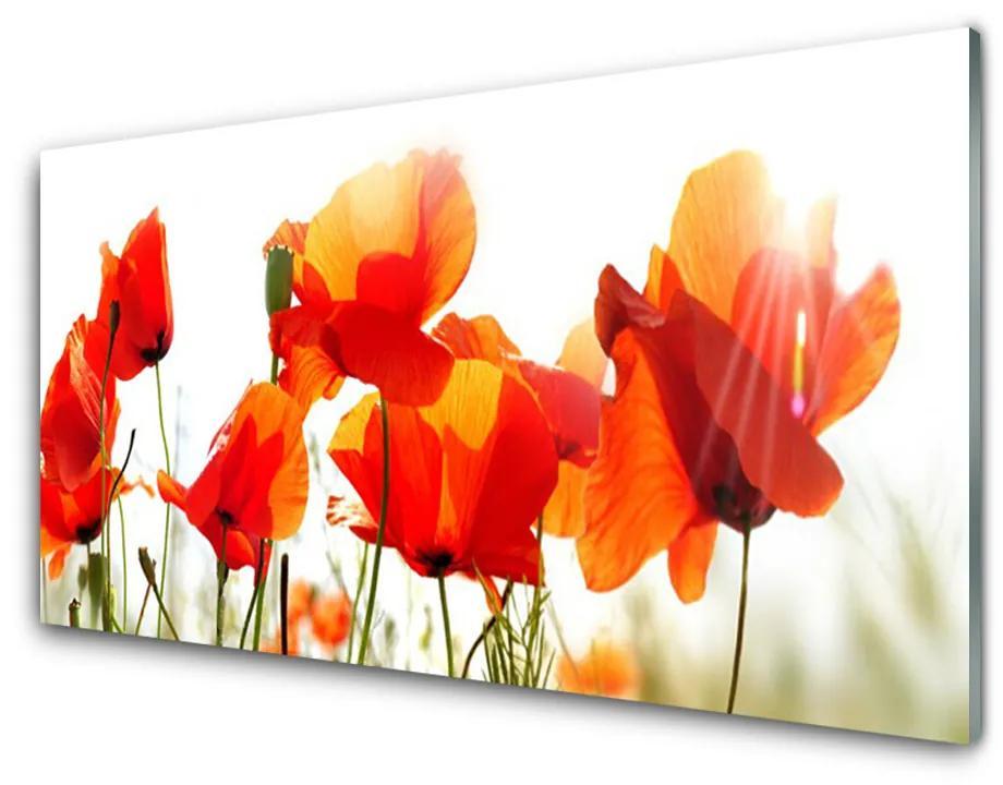 Tablou pe sticla acrilica Maci Floral Roșu Galben