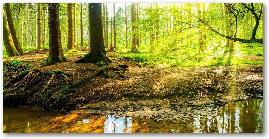 Tablou pe acril Soare pădure raze