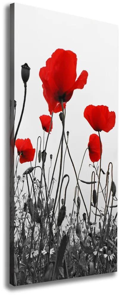 Print pe canvas Wildflowers maci