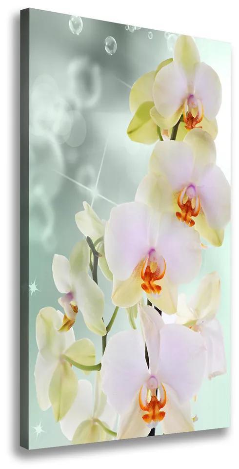 Tablou canvas Orhidee