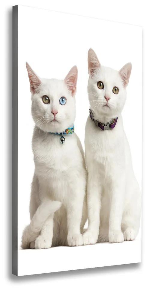 Print pe canvas Două pisici albe
