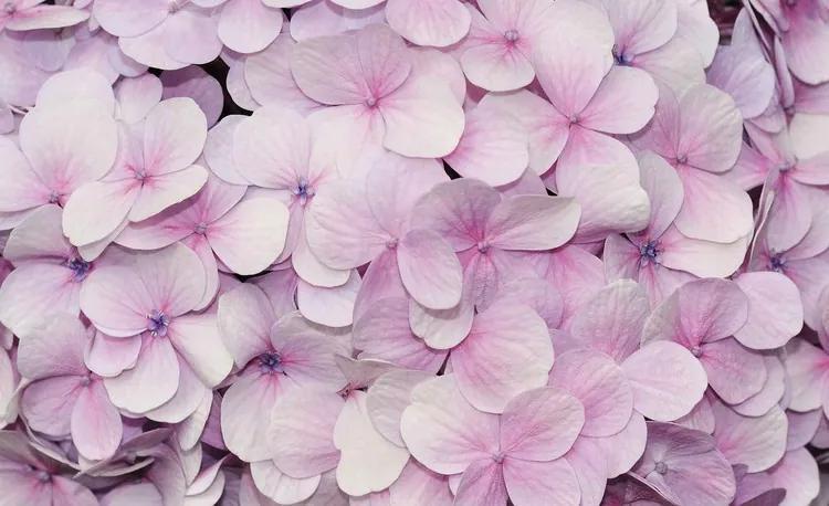 Purple Flowers Floral Design Fototapet, (104 x 70.5 cm)