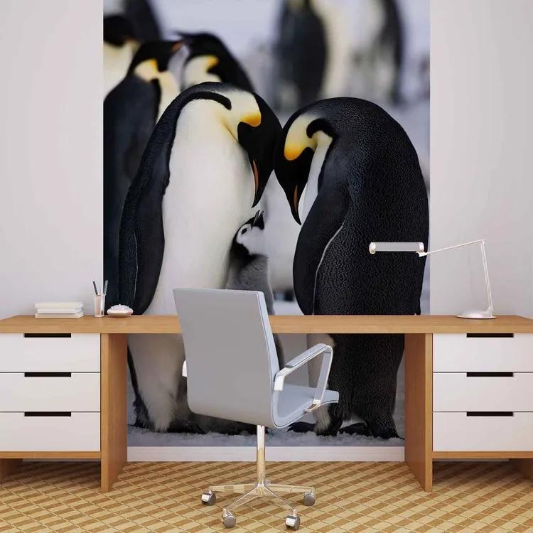 Animals Penguin Fototapet, (184 x 254 cm)