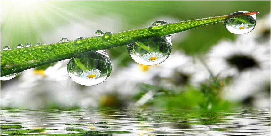 Imagine de sticlă Picaturi pe iarba