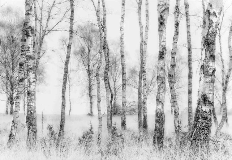 Black And White Fototapet, (254 x 184 cm)