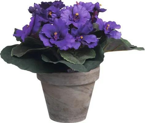 Floare artificiala, Saintpaulia, violet