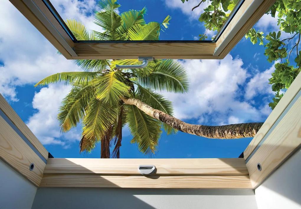 Fototapet - Privire din geam spre un palmier (254x184 cm), în 8 de alte dimensiuni noi