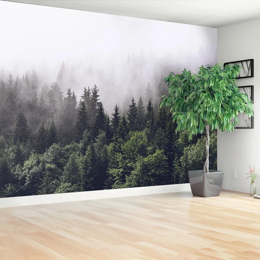 Fototapet Mountain Forest