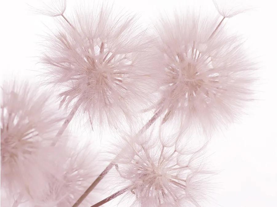 Fototapet papadie roz delicata