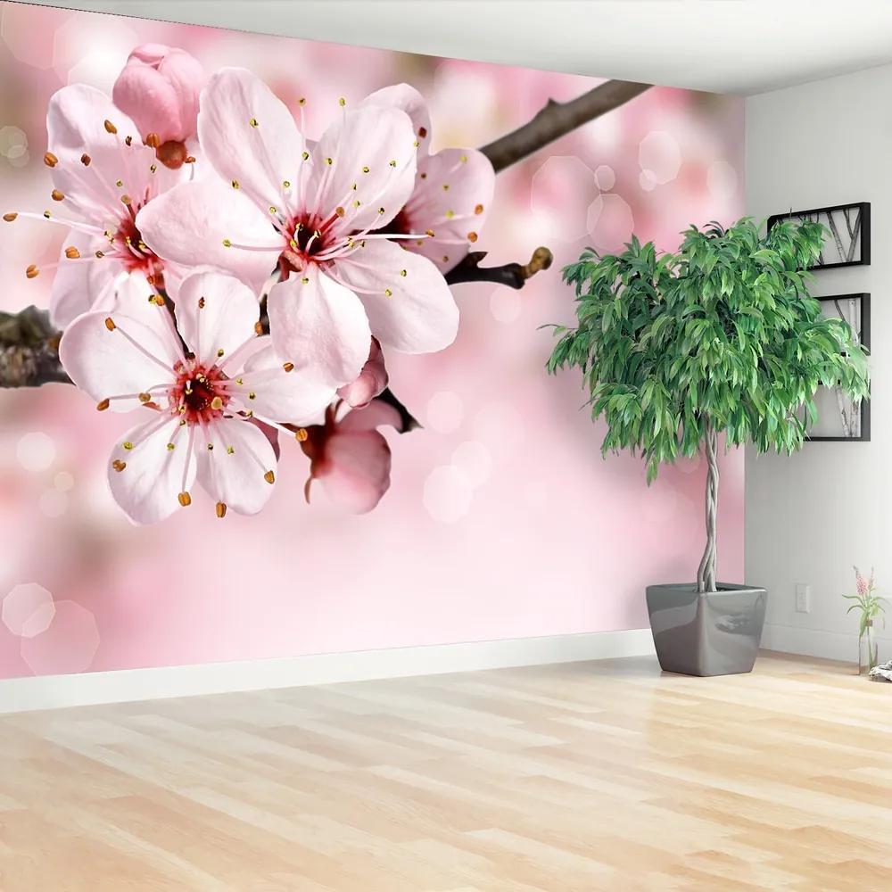 Fototapet Floare roz