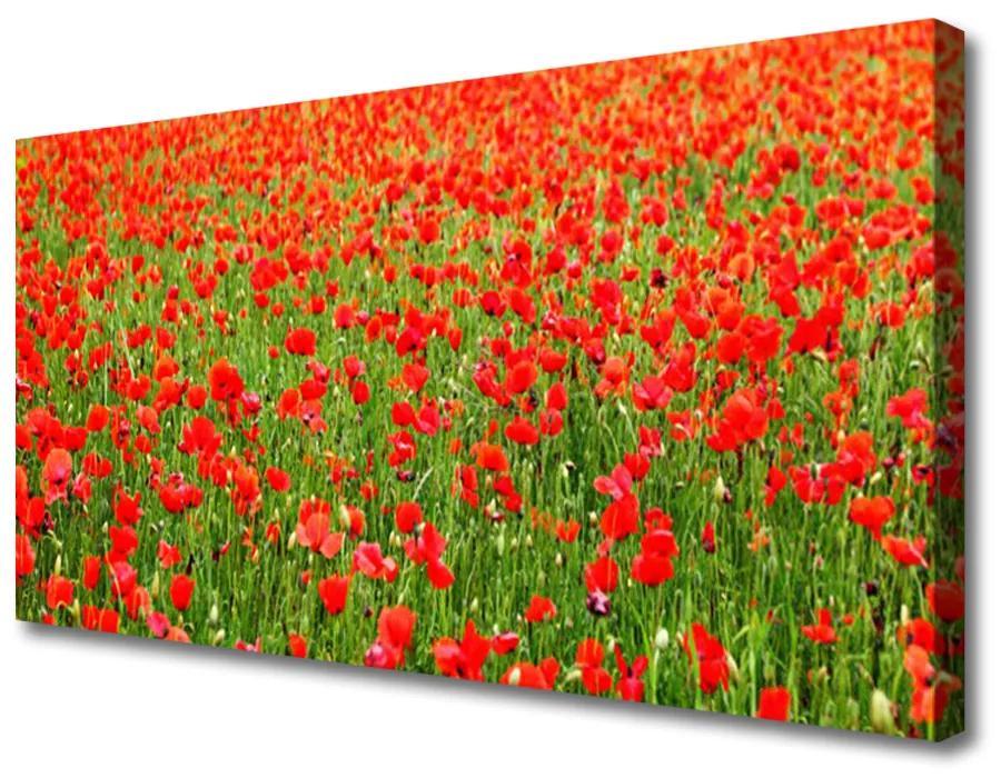 Tablou pe panza canvas Maci Natura Roșu Verde